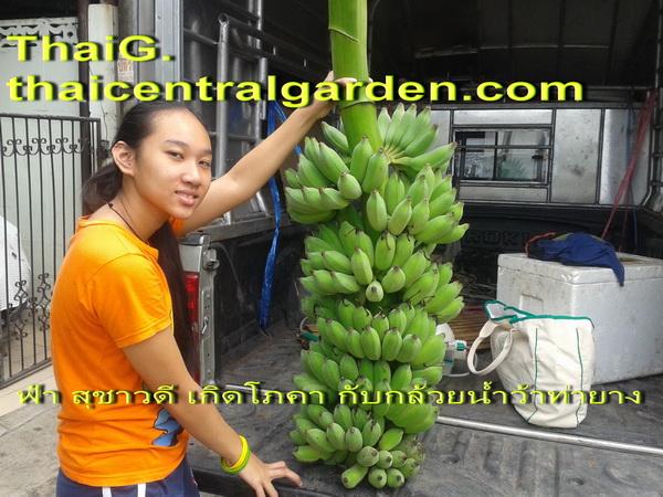 กล้วยน้ำว้าท่ายาาง