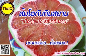 ผลส้มโอรสชาติดี พันธุ์ส้มโอทับทิมสยาม สวนขายพันธุ์ส้มโอThaiG