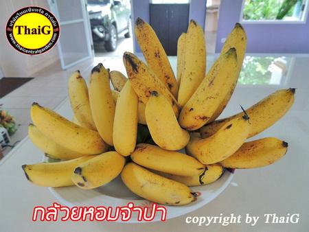 กล้วย หอม จำปา