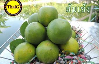 ผลส้มเช้ง สวนThaiG