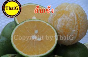 ส้มเช้ง ส้มเปลือกหนารสชาติอร่อย