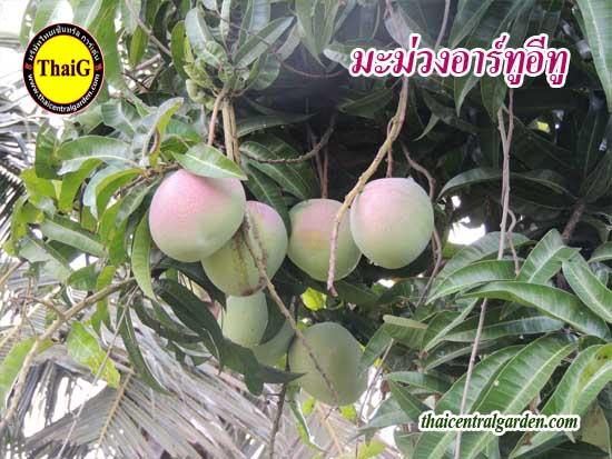 thaiG สวนไทยจี